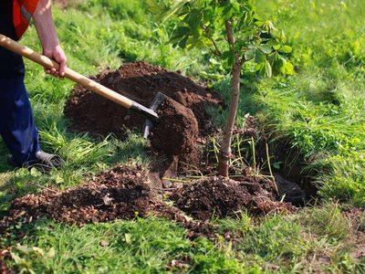Por el Día Internacional de los Bosques plantarán árboles nativos en todo el Paraguay