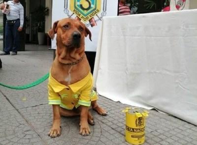 Fallece Ouro, el querido perro bombero de la Tercera Compañía de Sajonia