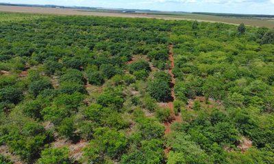 ITAIPU preserva áreas boscosas con tareas de restauración y campañas de concienciación