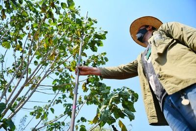 Itaipú preserva áreas boscosas con tareas de restauración y campañas de concienciación