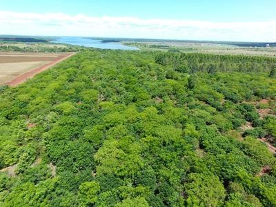 Por día internacional de los bosques, realizaron acciones de restauración y preservación