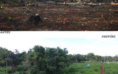 ITAIPU preserva áreas boscosas con tareas de restauración y campañas de concienciación – Diario TNPRESS