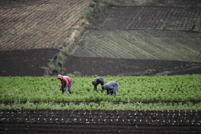 Destacan el potencial de la bioeconomía en los sistemas alimentarios de América