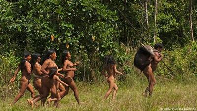 Pueblos indígenas, mejores guardianes de los bosques en América Latina