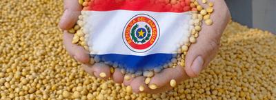 Marroquíes muestran interés por la soja y maíz paraguayo