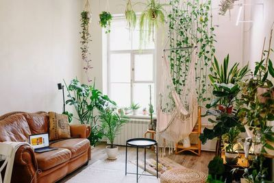 Tres de las mejores plantas para tus ventanas más soleadas