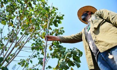 Preservan áreas boscosas con restauración y campañas de concienciación