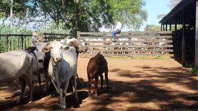 Banda de abigeos lleva casi 50 cabezas de ganado de una estancia