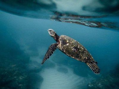 Tiburones, pingüinos y tortugas nadan de forma muy parecida