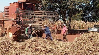 Pequeños campesinos tienen rendimientos de soja de más de 3.500 kilos por hectárea
