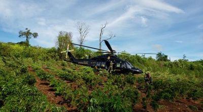 Amambay: Se anularon cerca de 2.000 toneladas de marihuana