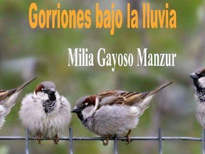 Humanización y cotidianidad en Gorriones bajo la lluvia