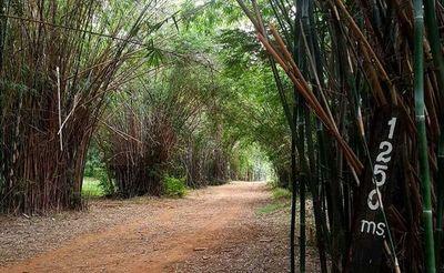 Fiscalía confía en dar pronto con presunto autor de violación y robo en el Botánico