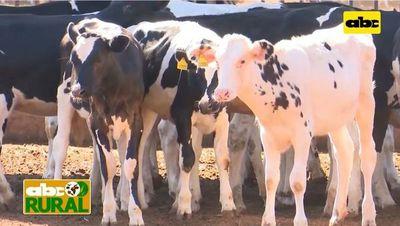 ABC Rural: Manejo de terneras lecheras para reposición