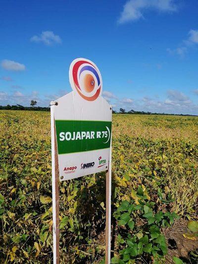 Se busca posicionar SOJAPAR en Bolivia y el Chaco paraguayo