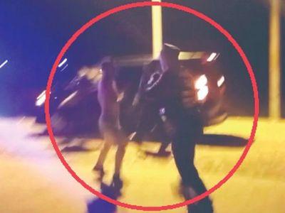 Zorro borracho se moqueteó con Caminera para no pagar multa