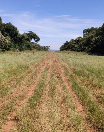 Hallan en Amambay una pista clandestina utilizada para tráfico de drogas