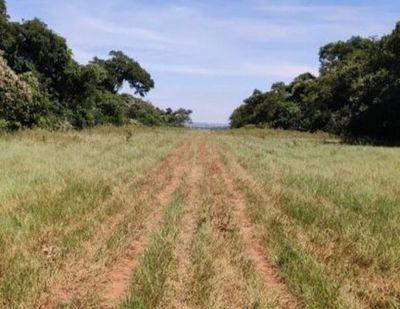 Hallan en zona de Zanja Pyta  pista clandestina utilizada para tráfico de drogas