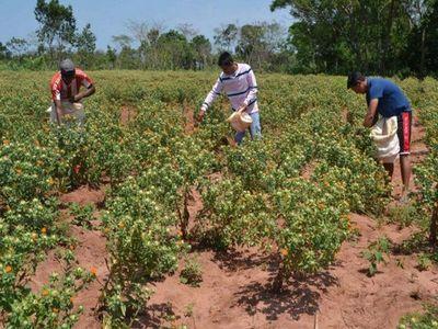 Agricultura Familiar ya tiene viceministro
