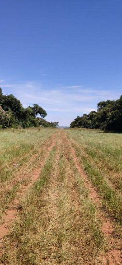 Hallan pista de aterrizaje clandestina en Amambay