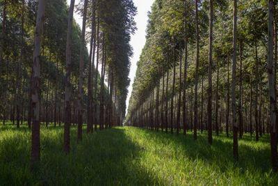 En julio se iniciará la implementación del programa de certificación de biomasa en industrias