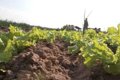 Paraguay y FAO fortalecerán la producción y sostenibilidad de la agricultura, bosques y uso del suelo