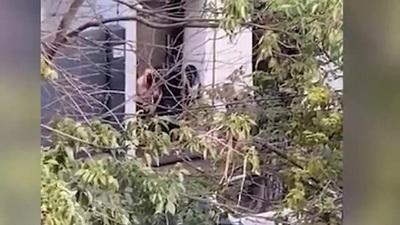 Nuevo caso de violencia: Brutal golpiza a una mujer