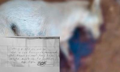 Pastoreo; A cuchillazos mataron a un perro y dejan una nota de amenaza – Prensa 5