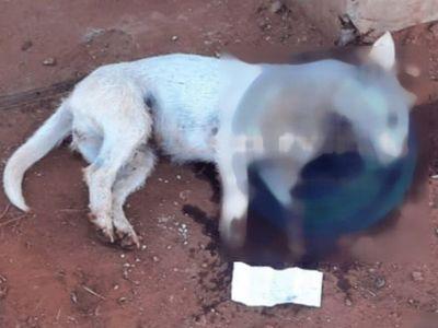 Mató a cuchillazos a un perrito que le molestaba