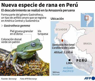 Nueva especie de rana marsupial