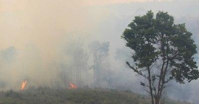La Nación / Cultivos ilegales ganan terreno en la Reserva San Rafael tras el infierno de los incendios