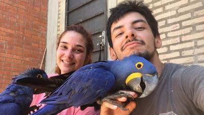 La ONG que quería salvar al guacamayo azul y ahora rescata todo tipo de animales silvestres