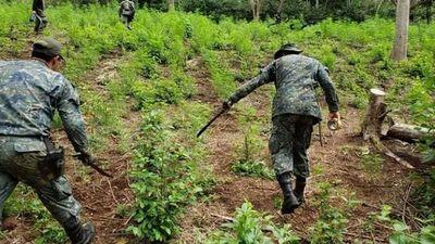 SENAD y FTC inician incursiones en zonas de cultivos ilícitos en Amambay