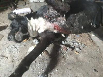 Perro murió de una puñalada en el corazón y salvó a su dueño