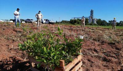 Buscan conservación de 1.680 árboles plantados en Canindeyú