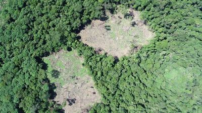 Destruyeron 70 hectáreas de marihuana en la reserva Mbaracayú