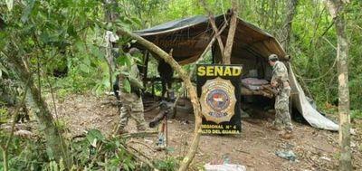 Policía destruye plantación de marihuana en Cruce Bella Vista