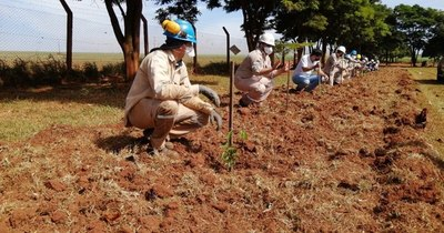 La Nación / LDC y A Todo Pulmón unen fuerzas para plantar 1.680 árboles en Canindeyú