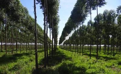 Exportaciones de productos forestales crecieron 124%