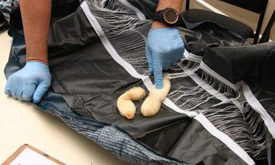 Senad detectó cocaína que tenían por destinos Hong Kong, Australia e Irlanda