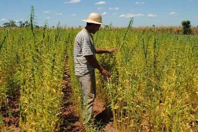 Destacan avances en mejoras para la inocuidad de rubros agrícolas