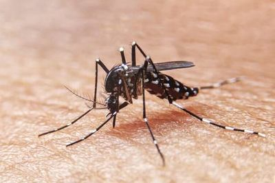 Dengue: Instan a mantener entorno domiciliario y laboral limpios