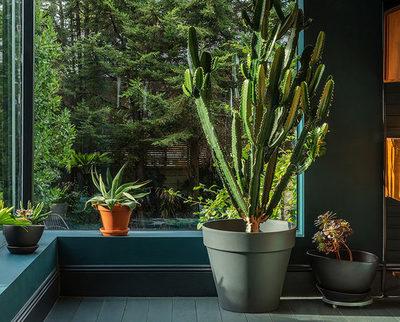Las mejores plantas para tener en el interior de la casa