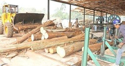 La Nación / Destino LN: Caaguazú, capital de la madera y líder nacional en producción de mandioca