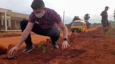 Cultivan 300 plantines de lapacho en el km 10