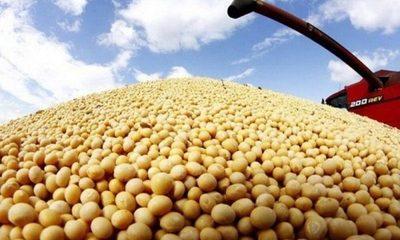 Aumento de precio internacional de soja ayudará tranquilizar finanzas del campo, destacan productores
