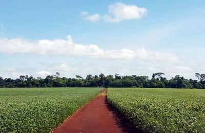 Informe del INBIO sobre superficies de siembra revela mayor avance del principal cultivo de renta