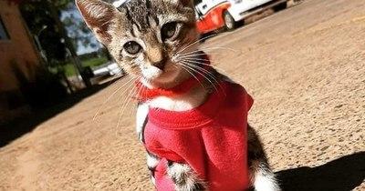 La Nación / Michurecc, la gatita rescatista que sobrevivió al abandono
