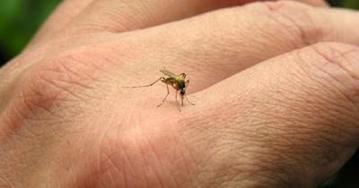 La Nación / Dengue: 70% de los casos procede del norte del país