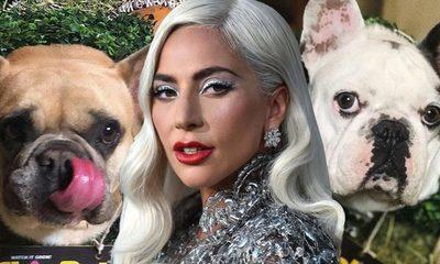 Arrestan a los secuestradores de los perros de Lady Gaga